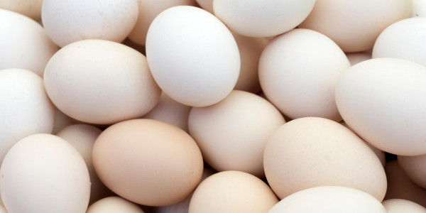 भाजपा विधायकों ने बच्चों के मिड डे मील में अंडा परोसे जाने का किया विरोध
