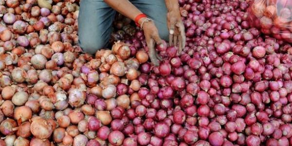 प्याज बेच रही है कमलनाथ सरकार: आइए, 50 रुपए में 1 किलो ले जाइए
