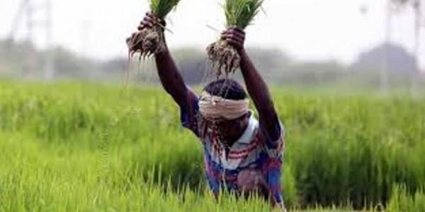 Gujarat wants Centre to make Pradhan Mantri Fasal Bima scheme voluntary