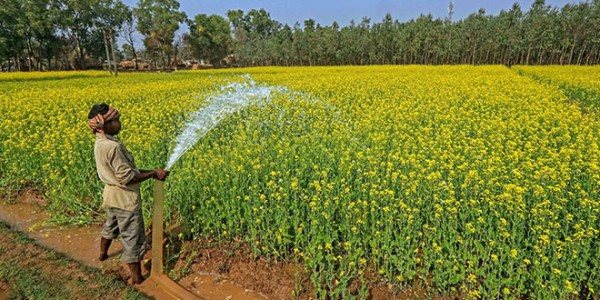 Govt forms high-powered committee to transform agriculture, raise farmers' income, suggest policy measures, attract investments
