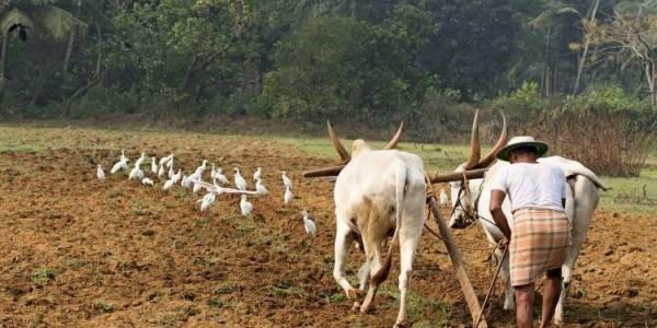 sirpur-farmers-will-do-jungle-satyagraha-for-dam