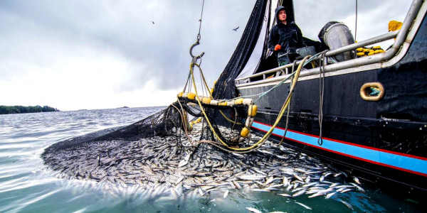 Will ensure no unregulated and disastrous fishing, says Fisheries Minister