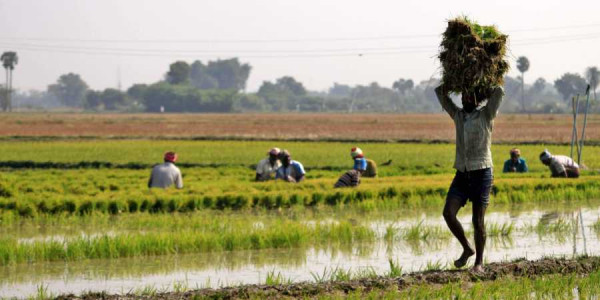 Tamil Nadu government begins Copra procurement at hiked rates under Price Support Scheme