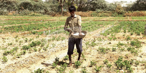 Crop insurance claim: Gujarat govt mulls corpus for farmers