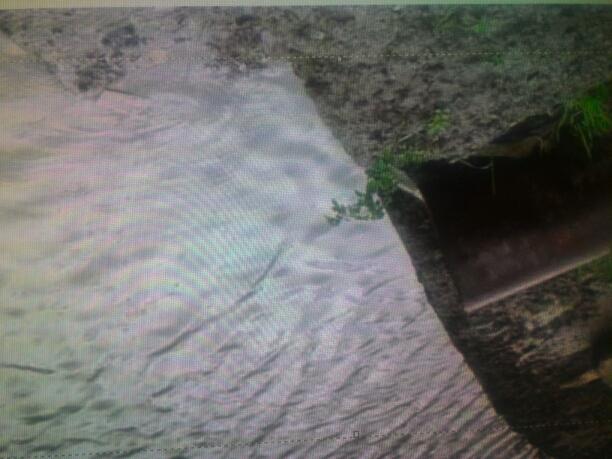 Pollute of ganga water