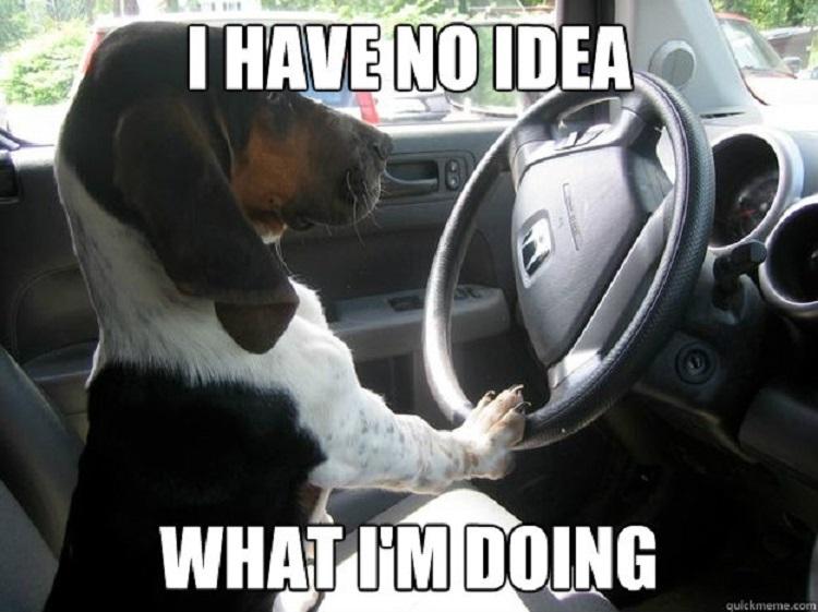 Motorist Signs Terrible Driver