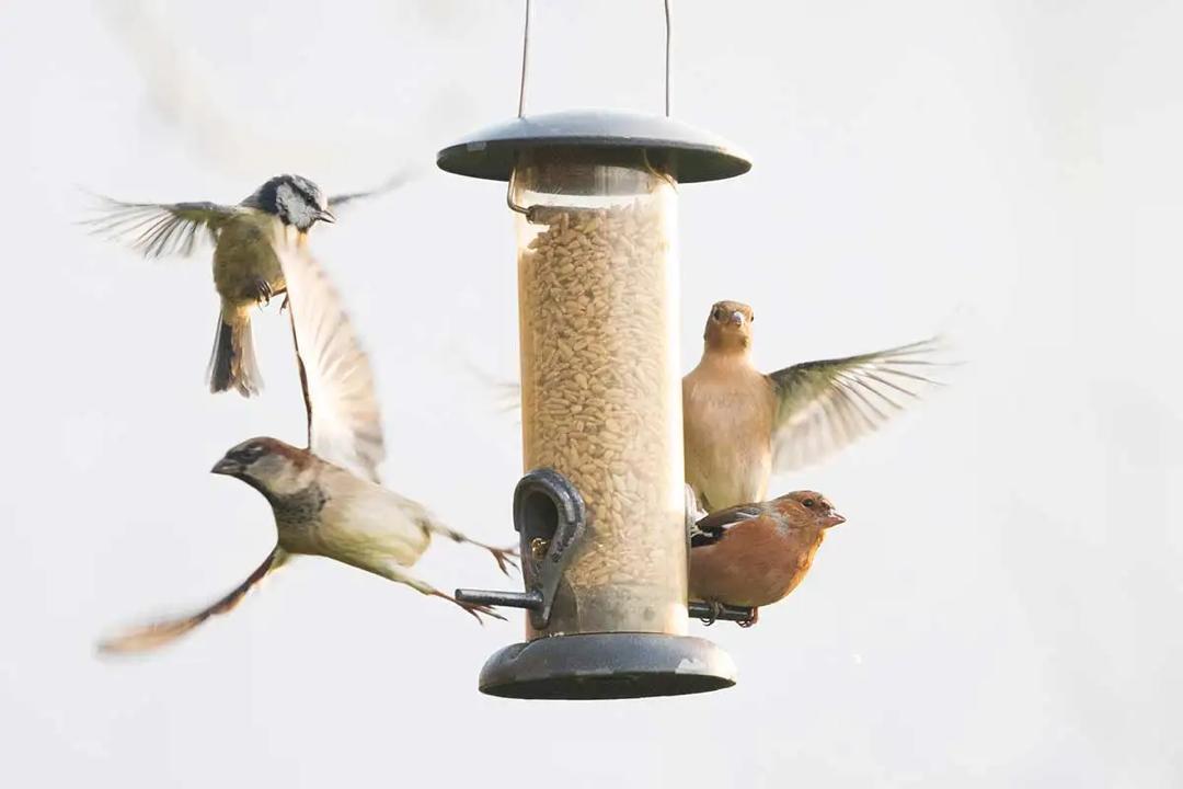 Outdoor Bird Feeder Pet Supplies Pet Feeder