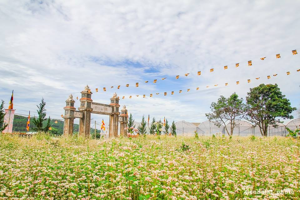 Vườn hoa tam giác nhạch nhỏ xinh trước chùa Vạn Đức, Đà Lạt