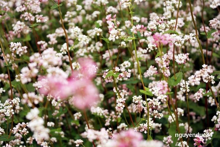 Những nhành hoa nhỏ xíu mà mang nét đẹp riêng