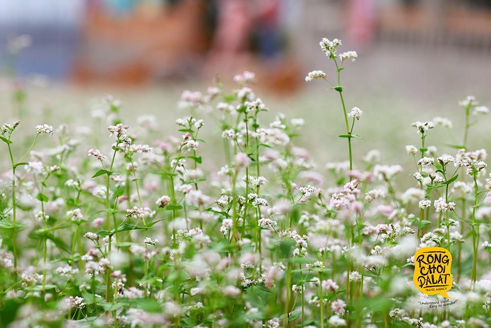 Nét mong manh trên từng nhành hoa