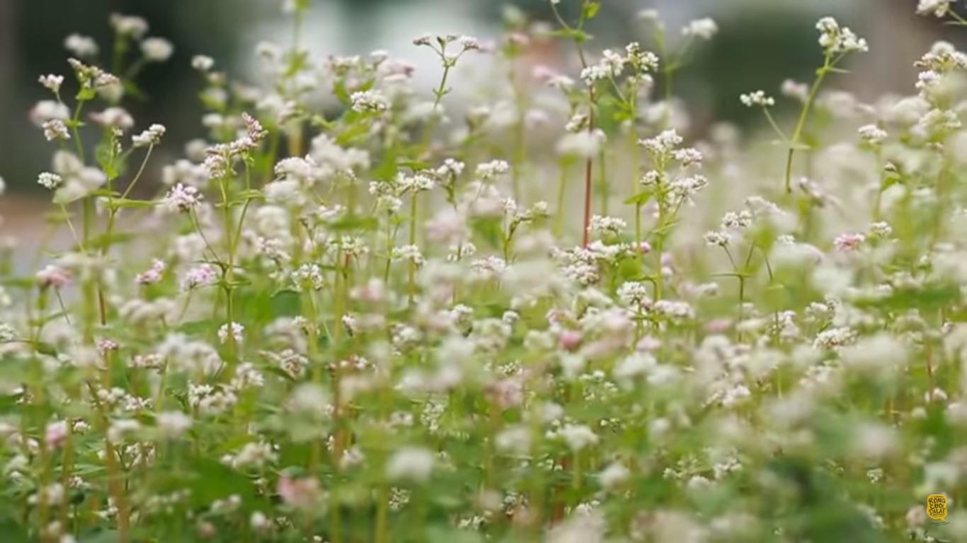 Hoa đẹp nhất vào khoảnh khắc sắp úa tàn