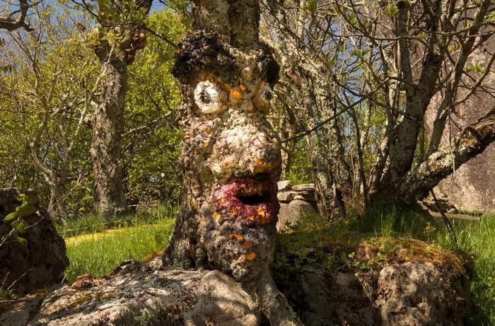 """Công viên đầy rẫy những """"góc cây tức giận"""" với hình thù kỳ quái"""