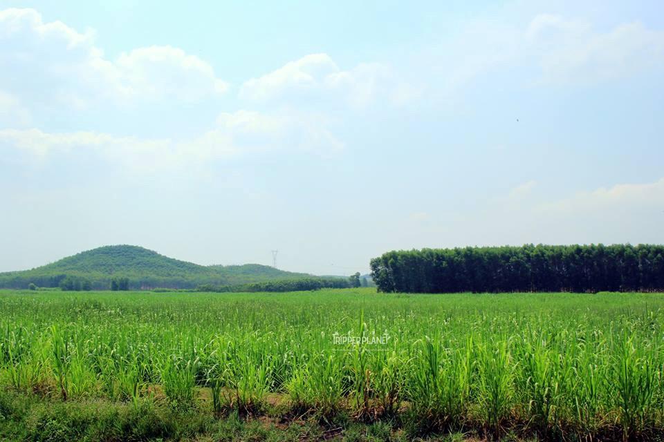Màu xanh mát ở Vĩnh Cửu, Đồng Nai