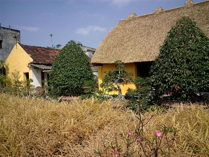Mái nhà hoàn toàn làm bằng rạ có độ dày gần 1 m, bên trong được liên kết bằng các cột, rui, mè rất chắc chắn.
