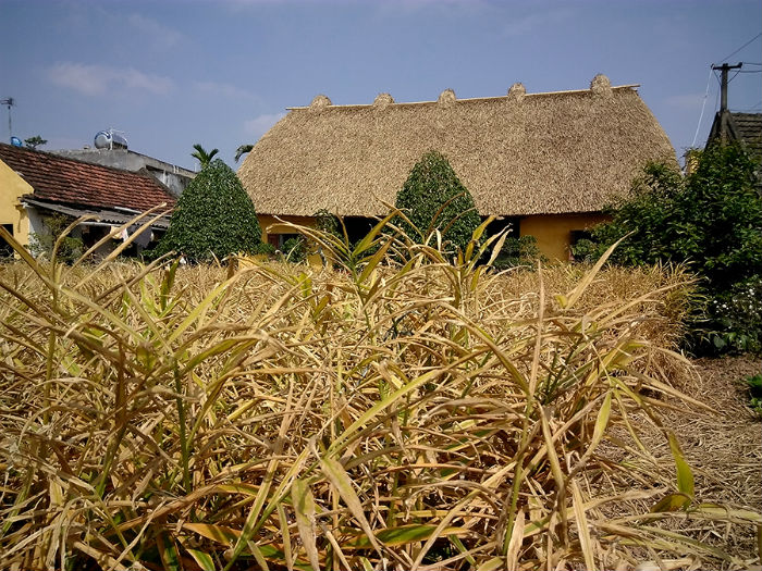 Chủ nhân ngôi nhà là một nghệ nhân trồng đào cảnh. Năm nay 70 tuổi, sức khỏe đã yếu, ông chuyển sang trồng gừng. Vườn gừng già đem lại cho ngôi nhà một khung cảnh khác lạ.