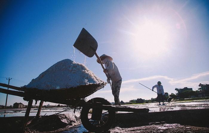Công việc tiếp tục cho đến chiều muộn với các khâu thu hoạch, đẩy muối về kho.