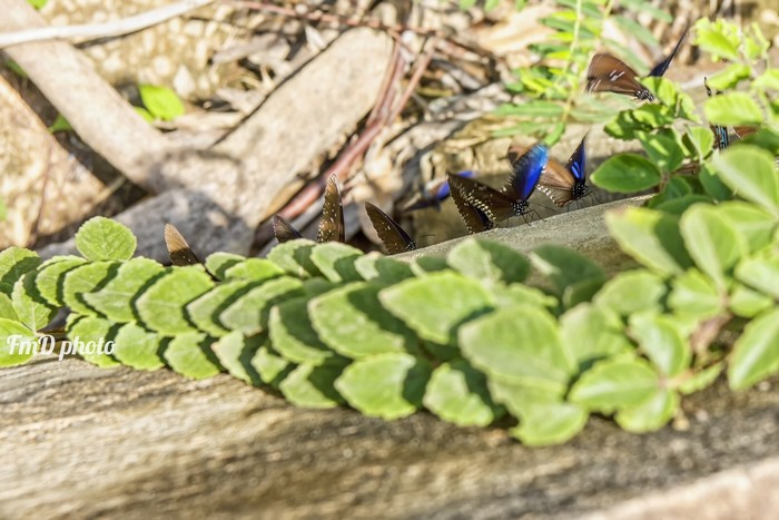 Bạn thoải mái săn ảnh bướm nhưng chú ý các bụi rậm, hốc đá, đề phòng rắn, vắt. Với thời tiết hiện nay, bạn nên mang nhiều nước, áo mưa và đồ dùng chống nước cho balo.