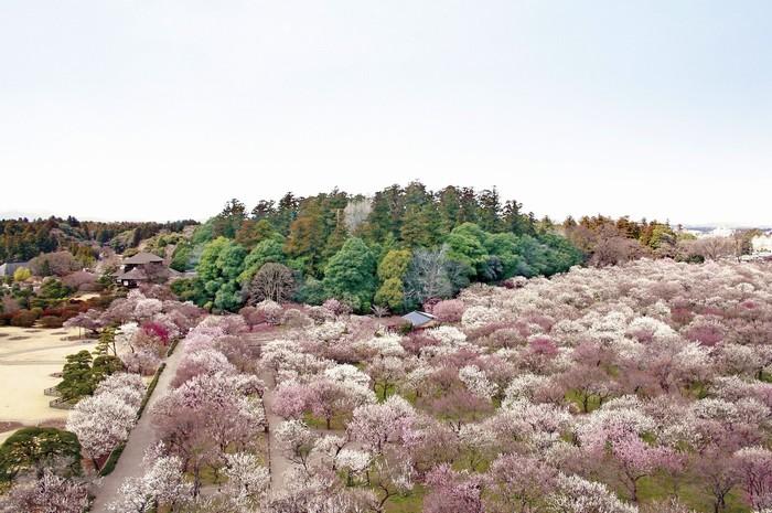Công viên Kairakuen là khu vườn Nhật nằm ở thành phố Mito, mở cửa miễn phí cho công chúng tham quan.