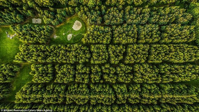Nhiếp ảnh gia người Đan Mạch thường tập trung chụp lại các thảm cây rộng lớn với những sắc độ khác nhau của màu xanh, và rất hạn chế chỉnh sửa ảnh.