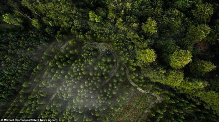 Một con đường uốn lượn bên dưới những tán cây thông được Michael chụp tại khu rừng Kalbyris, nơi rất hiếm có nhiếp ảnh gia tìm tới chụp hình.