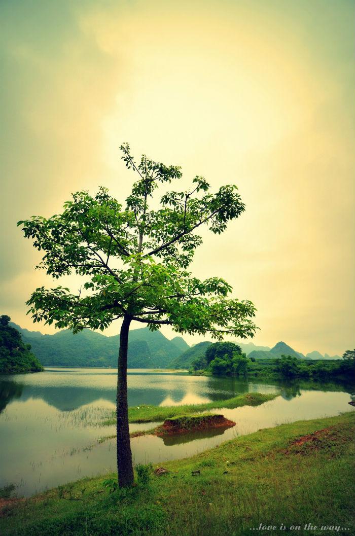 Hít thở bầu không khí trong lành bên bờ hồ cũng khiến bạn cảm thấy đong đầy hạnh phúc