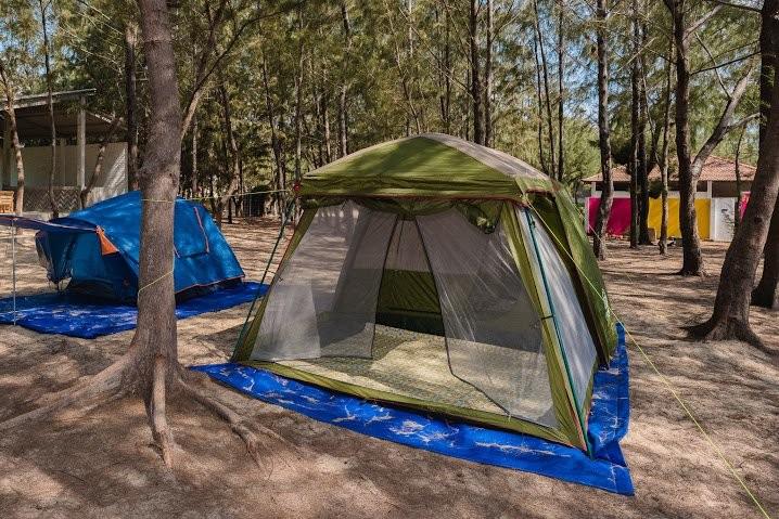 Lều trại giữa rừng dương