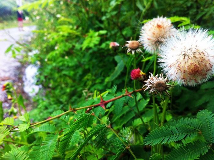 Những bông hoa khoe sắc trên con đường dẫn lối đến ngọn hải đăng - Ảnh: hientete