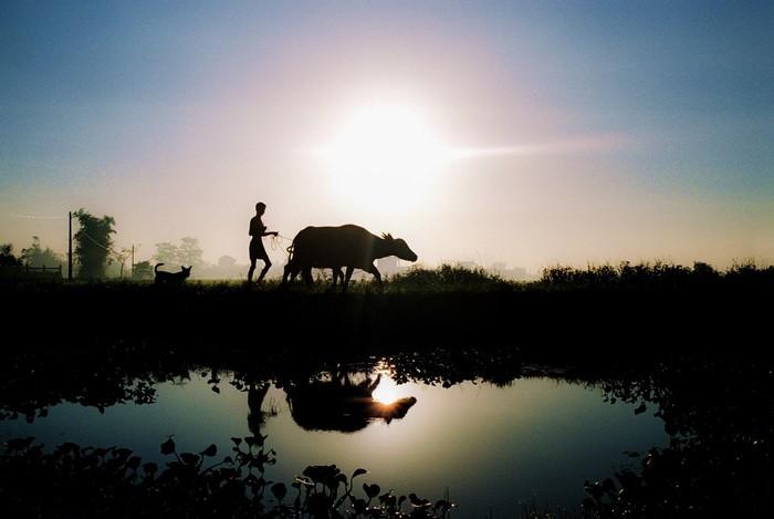 Thước ảnh đẹp lung linh biết bao về một vùng quê Thái Bình an yên