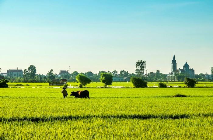 Cảnh vật yên bình đẹp miên man ở huyện phía Đông tỉnh Thái Bình