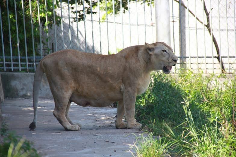 Những loài đông vật hoang dã và quý hiếm ở Safri land Mường Thanh