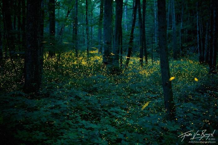 Hè lên rừng thưởng lãm đom đóm đẹp như cổ tích