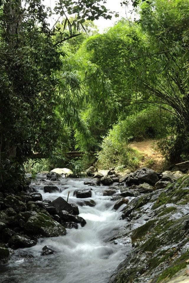 Con suối nhỏ dẫn lối đưa bạn đến thác Tà Ngào