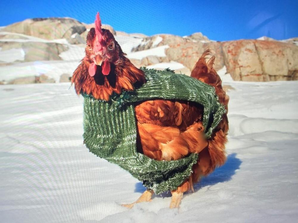 Bộ trang phục tự chế chống lạnh dành cho Monique