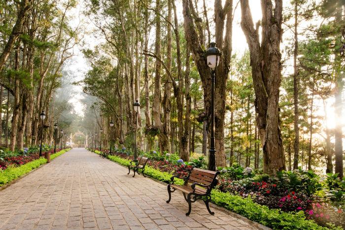Lối vào với hai hàng cây tràm được Robert Clément Bourgery cho trồng ngay từ ngày đầu xây dinh thự. Du khách tham quan dọc lối có thể nghỉ chân ngắm cảnh bên những chiếc ghế sắt đậm phong cách châu Âu.