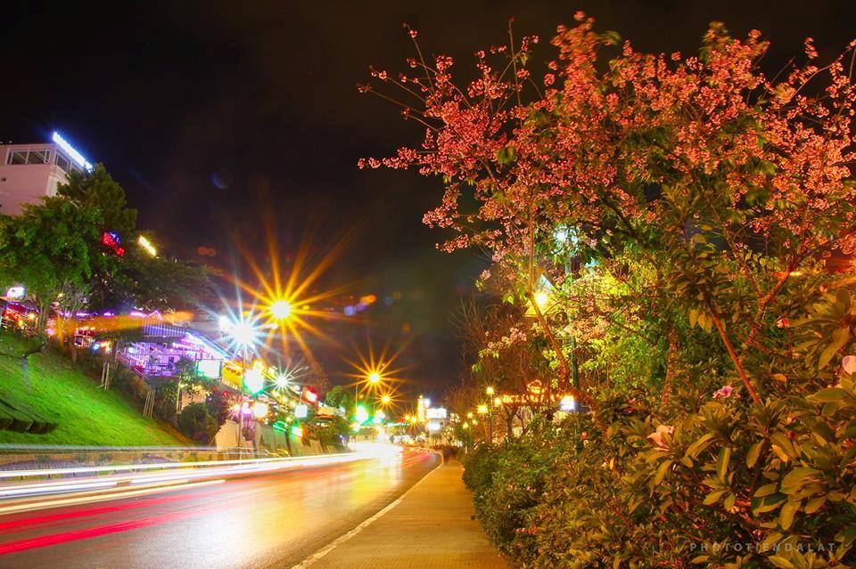 Con đường dẫn lên trung tâm thành phố rực rỡ trong đêm