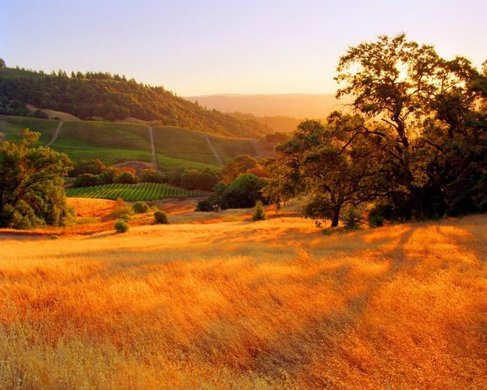 Bức ảnh trên được chụp tai hạt Sonoma, California, Mỹ.