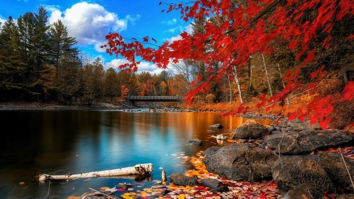 Mùa thu ở Toronto nổi bật với sắc đỏ của cây cối. Nhiều du khách cho biết họ thích thời tiết vào thu ở Canada, mặc dù hơi lạnh so với các nơi khác.
