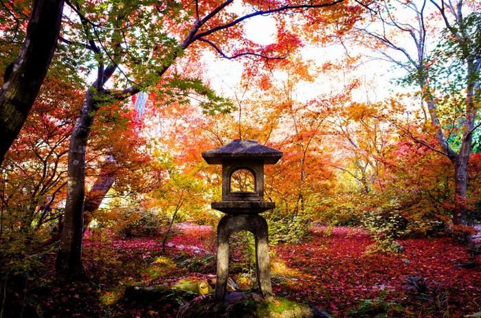 Mùa thu ở Nhật Bản cũng là một trong những điểm đến được nhiều du khách đánh giá cao.