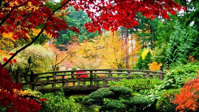 Đến Trung Quốc mùa thu, du khách sẽ được chiêm ngưỡng 3 màu chủ đạo là những thảm lá vàng, đỏ và cam đan xen nhau.