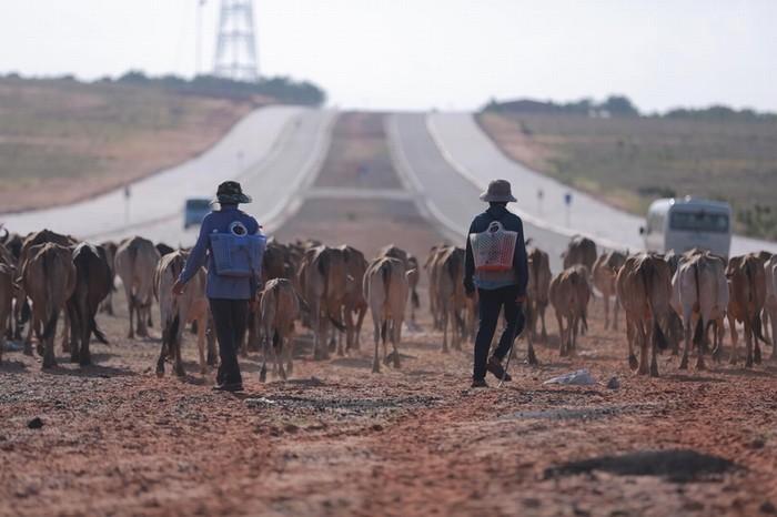 13h30, hành trình bắt đầu với sa mạc cát đỏ hoang sơ dẫn vào Bàu Trắng. Thỉnh thoảng bạn sẽ bị chặn đứng bởi đàn bò của người địa phương. Đoạn đường di chuyển này mất khoảng một tiếng.