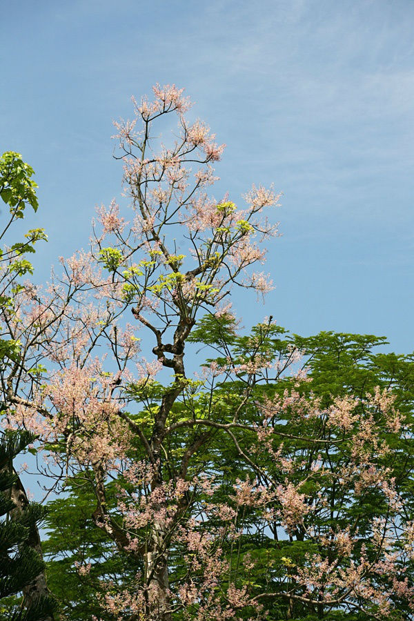 Trong 146 hình ảnh tiêu biểu của thiên nhiên và sản vật Việt Nam được ghi chép trên cửu đỉnh đặt trước sân Thế Miếu - được coi là bảo vật quốc gia của nhà Nguyễn - đúc từ năm 1835-1837, dưới thời vua Minh Mạng; cây ngô đồng được vinh danh, ghi khắc trên Nhân Đỉnh (cũng là chiếc đỉnh ứng với vua Minh Mạng).