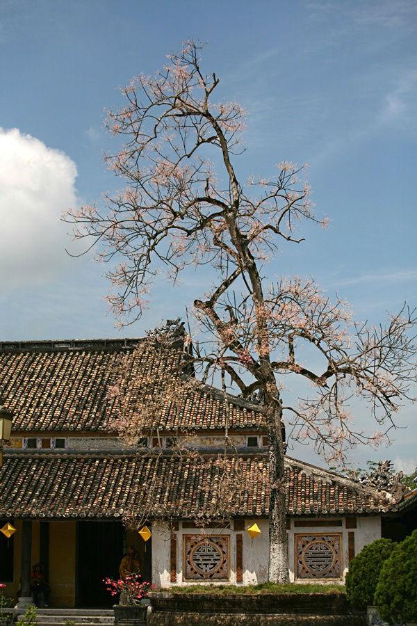 Sắc hoa tô thắm trên nền trời xanh, làm rực rỡ thêm cho khung cảnh Đại Nội.