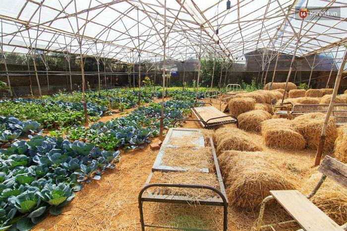 Tre''''''''s House có cả khu trồng rau cực xinh