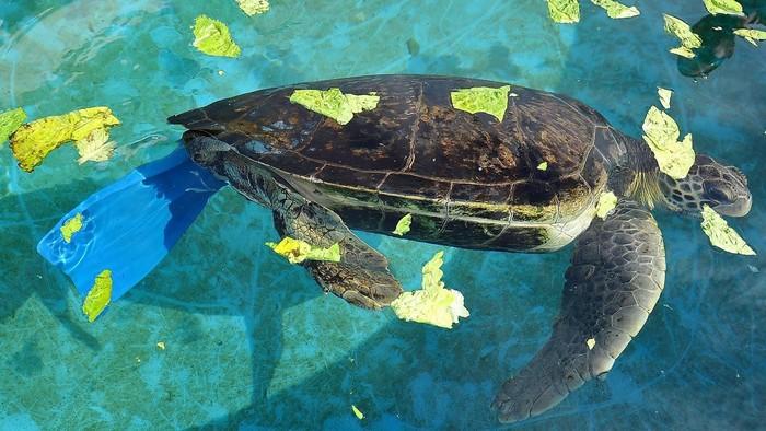 Rùa tung tăng trong dòng nước biển trong xanh