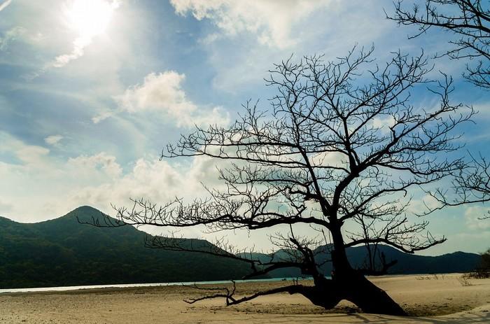Xác cây khô này là một điểm chụp hình ấn tượng ở Côn Đảo