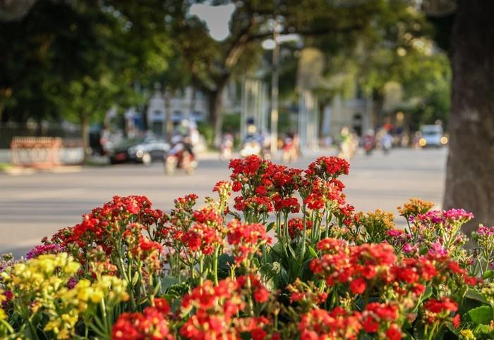 Sắc hoa thu Hà Nội