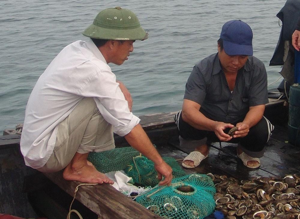 Người dân xứ đảo gắn liền với bào ngư nổi tiếng