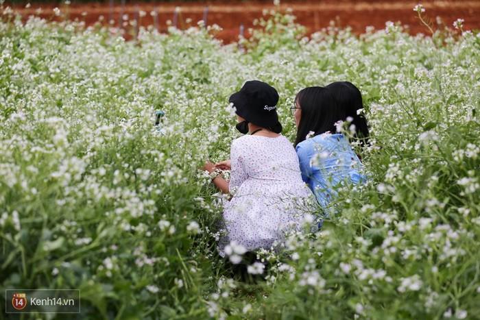Một số bạn trẻ vô tư chen vào giữa ruộng hoa tạo dáng