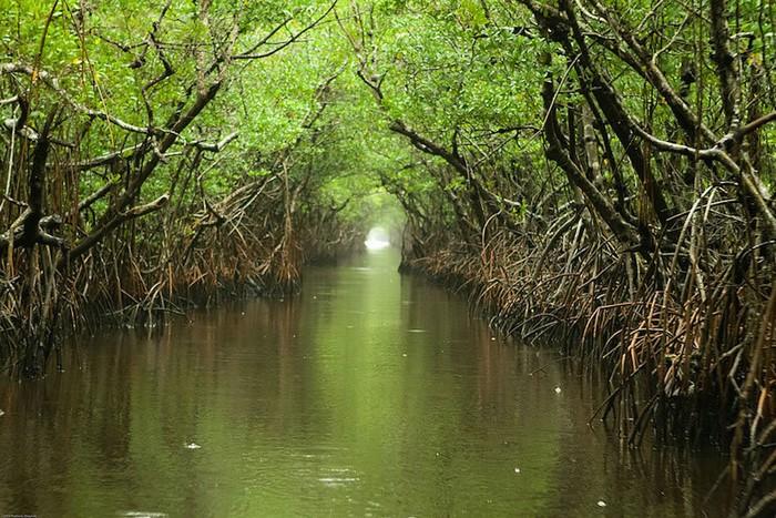 Nằm ở miền nam Florida (Mỹ), công viên quốc gia Everglades được xem như báu vật thế giới khi xuất hiện trong 3 danh sách lớn: Di sản thế giới, Khu dự trữ sinh quyển quốc tế và Vùng đất ngập nước có tầm quan trọng nhất thế giới. Everglades là nơi sinh sống của rất nhiều loài sinh vật hoang dã với hơn 400 loài chim, 275 loài cá và trên 20 loài rắn.