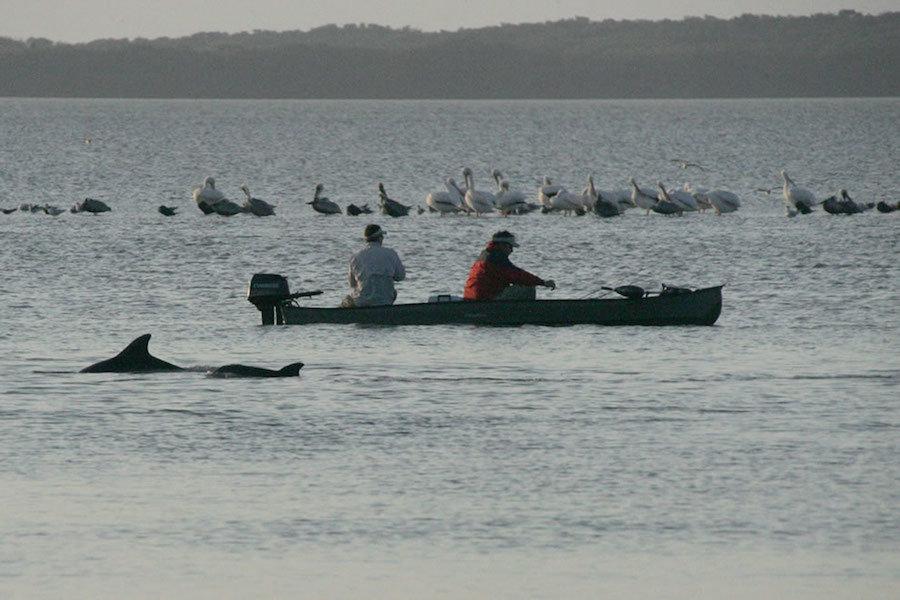 Cá heo và các loài chim tại Vịnh Florida. Vịnh Florida chiếm 1/3 diện tích Vườn quốc gia Everglades